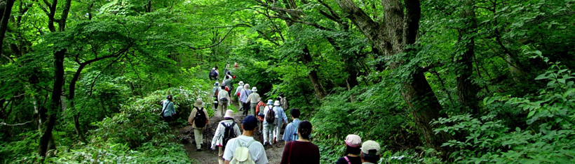 Trekking: Explore the beech forest and learn about the history of Daisenji Temple