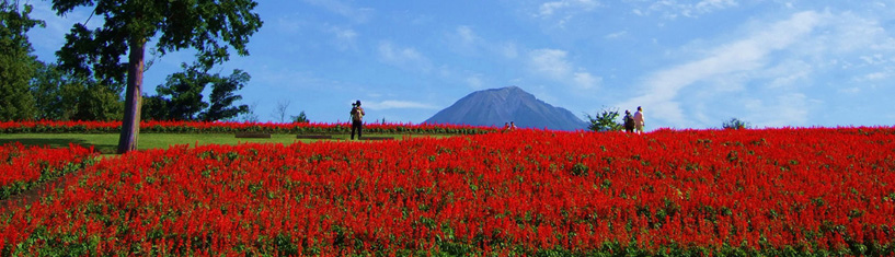 E. Flower Park and Local Specialty: Tottori Hanakairo Flower Park and local food